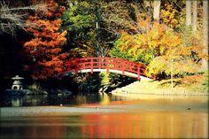 The Red Bridge during Fall, Duke Gardens. Taken by Jainil Shah at the Duke PhotoWalk.