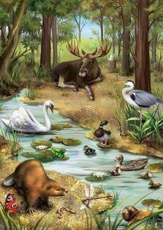 "Ebook: ""Animals around the World"" on Behance Wildlife Paintings, Wildlife Art, Animal Paintings, Illustration Mignonne, Illustration Art, Beautiful Birds, Animals Beautiful, Graffiti Kunst, Animals And Pets"