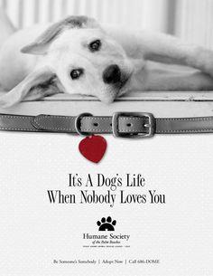 animal ads cute - Google 検索