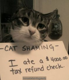 I wish my cat had a cheque that size to eat!