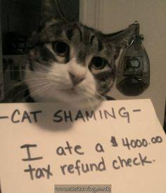 Cat Shaming | Everybody Loves a good shaming