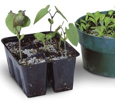 Starting seeds indoors is cheap and easy, and it allows you to grow vegetables that you wouldn't find in your local nursery or garden center. Most seeds can be started 6 to 8 weeks before your last...