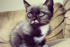 Step Right Up And meet your next kitten crush, complete with a slightly askew mustache, right here.