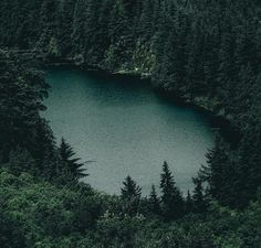 Image discovered by Seetme. Find images and videos about nature, forest and lake on We Heart It - the app to get lost in what you love. Slytherin Aesthetic, Harry Potter Aesthetic, Slytherin Pride, Trailer Park, Dark Green Aesthetic, Nature Aesthetic, Character Aesthetic, The Villain, Draco Malfoy