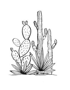 Cactus Grove Art Print by thedancingpine Pencil Art Drawings, Art Sketches, Cactus Drawing, Desert Art, Tips & Tricks, Colouring Pages, Art Lessons, Line Art, Amazing Art