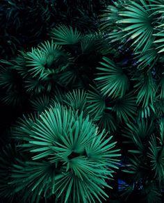 vert green greenery pantone 2017 trends tendances vert profond architecture design graphic and pattern design papier peints motifs beauté nature wild trees tropiques plants plantes femme décoration