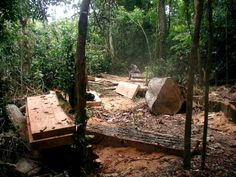 Illegally logged timber in the Amazon, southeastern Peru Photo credit: George Powell