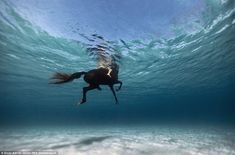 It's not just humans featured in his portfolio. This mesmerising image shows a horse and r...