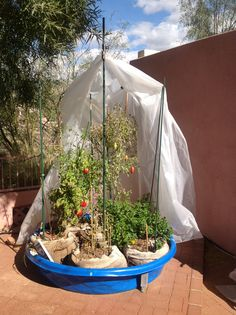 Repurpose An Old Beat Up Kiddie Pool Into A Raised Bed Garden For The Kids  To Plant And Play | Little Ladies | Pinterest | Plants, Gardens And Garden  ...