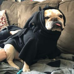 I can't even today#notcarryingyou #3flightsup #3flightsdown #frenchbulldog #rescuedog #frenchie #massachusetts #froodieshoodies #toothlessdragon  #ButIGotARasperry @mabelfloof