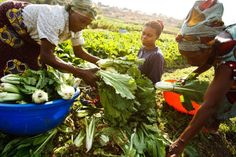 Family farmers key to eradicate hunger in Africa.  Investment in the enhancement of agricultural productivity and engagement of youth, smallholder and family farmers are among the key priority areas identified by the FAO Regional Conference for Africa to accelerate agricultural transformation and eradicate hunger in the region.