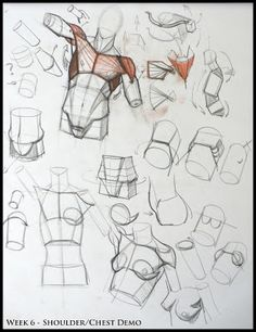 Analytical Figure Drawing Blog