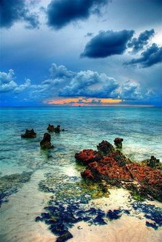 Cayman Island Reef, GrandCaymans