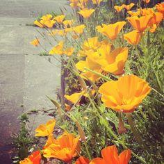 flowers in portland
