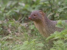 Bhimbandh Wildlife Sanctuary - in Bihar, India