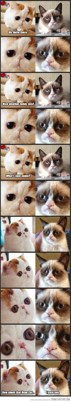 Snoopy Cat Meets Grumpy Cat… I cannot get enough of these guys!
