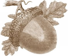 Vintage Acorn Images Fall. This comes in black also.