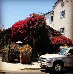 I love this bougainvillea covered house I saw a few a blocks from the aquarium.  #monterey #montereybay #montereybayaquarium #aquarium #pigeon #bird #wildlife #nature #saturday #weekend #fish #underwater #science #bigfish #fishtank #shark #plankton #anchovies #jellyfish #mechanical #beach #sea #wakeboard #kayak #boat #beach #sea #flowers #bush #red #bougainvillea #house #montereybaylocals - posted by Juan Límon https://www.instagram.com/juanslimon - See more of Monterey Bay at…