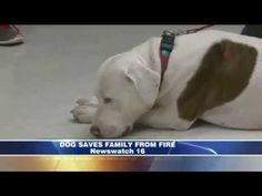 Pit Bull Rescue Saves New Family From House Fire
