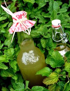 Ginger Juice, Thing 1, Limoncello, Hot Sauce Bottles, Jelly, Summertime, Smoothie, Food And Drink, Cooking Recipes