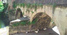 Vimercate, strage di anatre e germani al ponte di San Rocco: caccia al killer