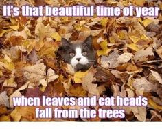 20 Cute and Funny Animal Fall Pictures You'll Love More than PSL #fallmemes #cutememe #cuteanimals #funnyanimals #animalmemes Funny Laugh, Funny Puns, Haha Funny, Funny Fails, Funny Animal Pictures, Funny Photos, Funny Animals, Cute Animals, Fall Pictures
