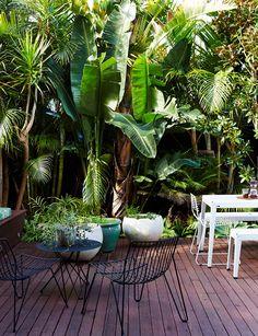 A guide to planning and building your dream deck - tropical garden ideas Small Tropical Gardens, Tropical Patio, Tropical Garden Design, Tropical Landscaping, Tropical Outdoor Decor, Tropical Plants, Bali Garden, Dream Garden, Home And Garden