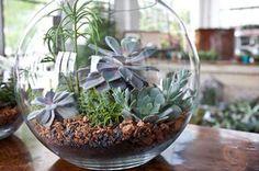 Suculentas en bola de cristal | Echeverria | Cielaria.com