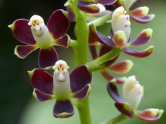Breathtaking orchid Flower pictures