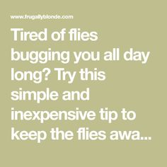 how to keep flies away from my home