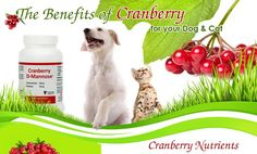 Are Cranberries Good For Dogs - http://pets-ok.com/are-cranberries-good-for-dogs-dogs-362.html