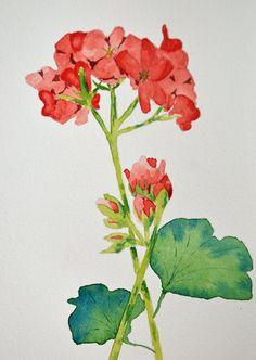 Art Fine ArtWatercolor Painting of Red Geranium by yankeegirlart, $40.00