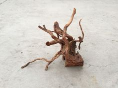 SR Redmoor Wood -- driftwood plant shrimp moss discus spiderwood spider fish #wood