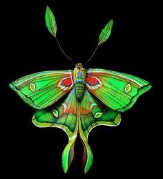luna moth by caitlin