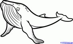 How to Draw a Humpback Whale, Humpback Whale, Step by Step, Sea animals, Animals, FREE Online Drawing Tutorial, Added by Dawn, February 11, ...