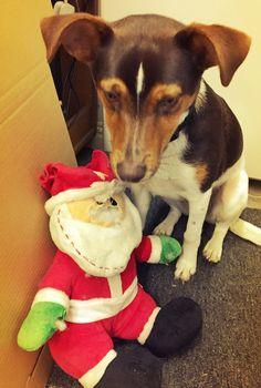 Meet Jack! Charity, Dinosaur Stuffed Animal, Adoption, Meet, Dogs, Animals, Foster Care Adoption, Animaux, Doggies