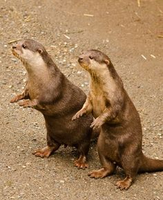 Otters up, You Talking To Me ?
