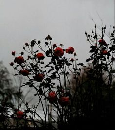 Image shared by 너의 조이┄❀. Find images and videos about grunge, aesthetic and nature on We Heart It - the app to get lost in what you love. Aesthetic Roses, Gothic Aesthetic, Plant Aesthetic, Gray Aesthetic, Aesthetic Backgrounds, Aesthetic Iphone Wallpaper, Aesthetic Wallpapers, Roses Photography, Image Photography