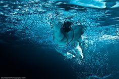 olympic swimming underwater photography mcmaster swim team fitness pinterest olympic swimming swimming and underwater - Olympic Swimming Underwater