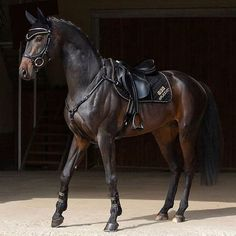 The Friesian was first introduced to the Americas when the Dutch settled on the southern tip of Manhattan Island in Warmblood Horses, Friesian Horse, Andalusian Horse, Arabian Horses, Cute Horses, Pretty Horses, Horse Love, Black Horses, Wild Horses