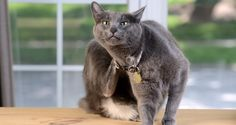 5 Serious Diseases Your Cat Can Get From Having Fleas