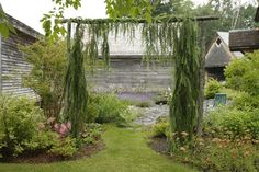 Phyllis Odessey... Weeping Larch, I think. I like the idea of conifers trained over an arbour.