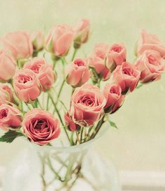 gorg, pink roses