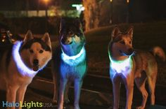 Halo Lights LED light up dog collars are the best, brightest dog collars EVER!