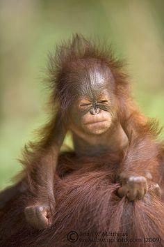 Orang-utan baby by Fauna & Flora International on Flickr.