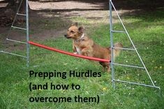 Overcoming the hurdles to UK city data analytics I Will Rise, Hurdles, Data Analytics, Rise Above, Prepping, How To Apply
