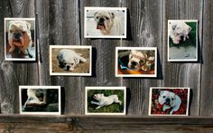 Bulldog Collection Blank Note Cards Set of 8 Animal by HBBeanstalk, $22.00