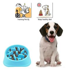 Ootdpet Fun Feeder Slow Feed Dog Bowl Slow Feed Interactive Bloat Stop Dog Bowl ** Click image for even more information. (This is an affiliate link). How To Stop Bloating, Slow Feeder, Dog Food Bowls, Keeping Healthy, Dog Food Recipes, Pet Supplies, Pets, Fun, Image