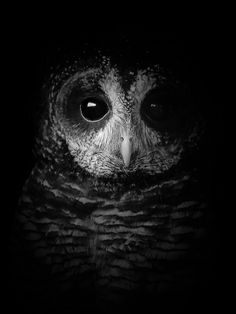TooWit, TooWoo! (Explore 27/3/2014) Portrait of an owl. ~By Jenny Vaughan-Coughlan https://www.flickr.com/photos/bymee/13447879835