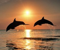 Sunset and dolphins in Clearwater, Florida.  Go to www.YourTravelVideos.com or just click on photo for home videos and much more on sites like this.